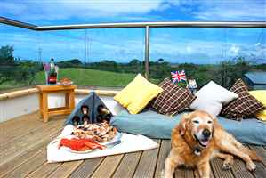 Golden retriever lying on balcony surrounded by cushions and food, royal chrome handrail balustrade
