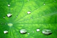 The hydrophobic properties of the lotus leaf have been mimicked and are available in DIY, after-market applications for glass. Learn the advantages today!